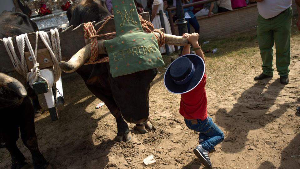 A child plays hanging from the horn of an ox during a pilgrimage in the village of El Rocio, southern Spain. (Jorge Guerrero / AFP)