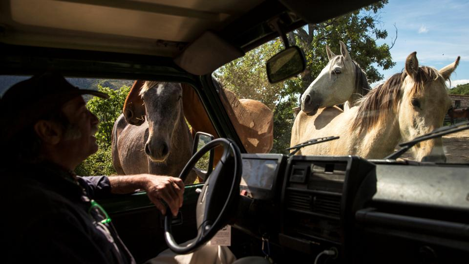 "Noailles sits in his car while surrounded by horses. ""The horse is a mirror,"" he said. ""They are gregarious creatures, born to live in herds."" (Juan Medina / REUTERS)"
