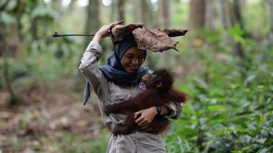 A staff member carries an orphaned orangutan at the newly opened FOUR PAWS Orangutan Forest School in East Kalimantan, Indonesia. (Four Paws / AFP)
