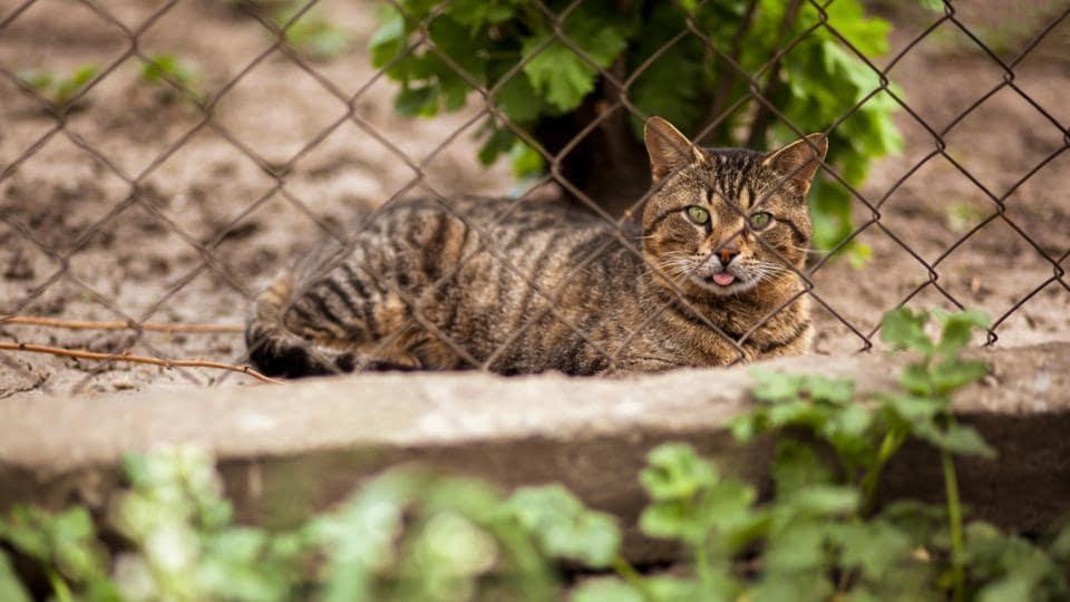 Australia wildlife,Australia cat proof fence,Wildlife conservation