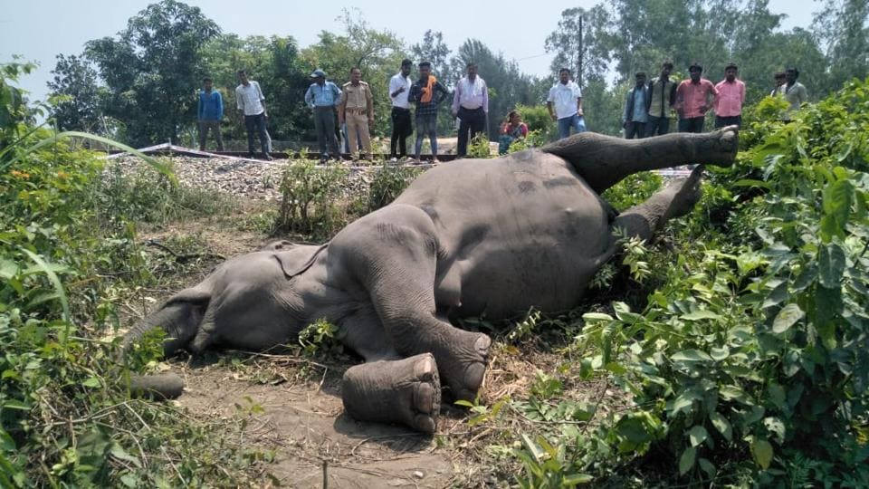 Elephant,Train accident,Central Institute of Medicinal and Aromatic Plants