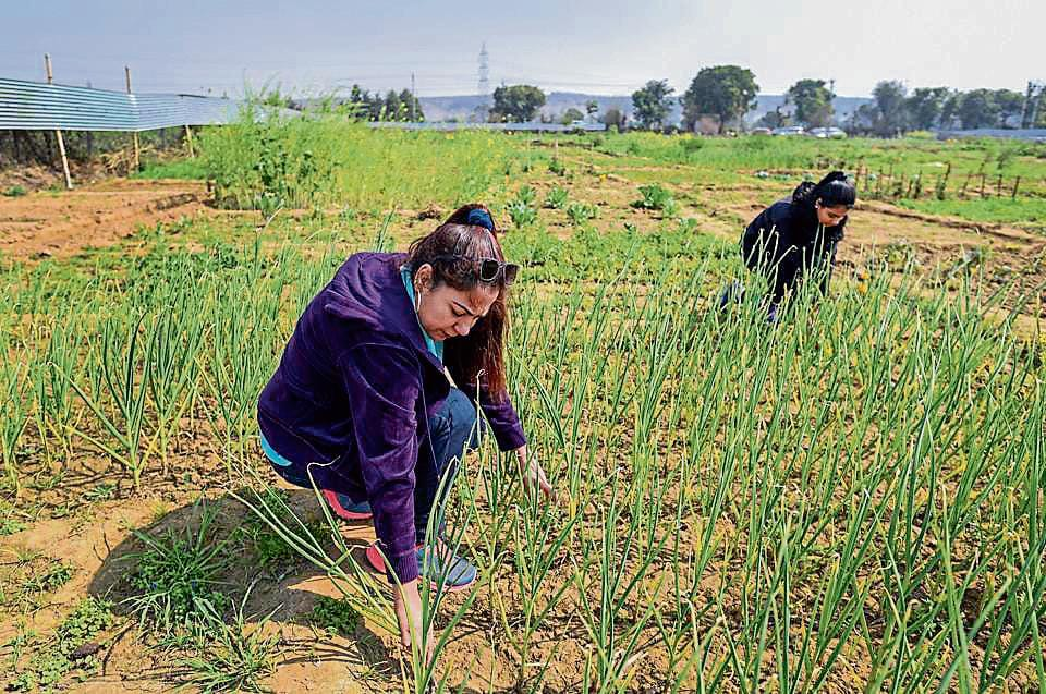 Once enacted, the proposed organic agriculture law will provide a legal backing to organic farming ensuring local farmers high returns for their produce.
