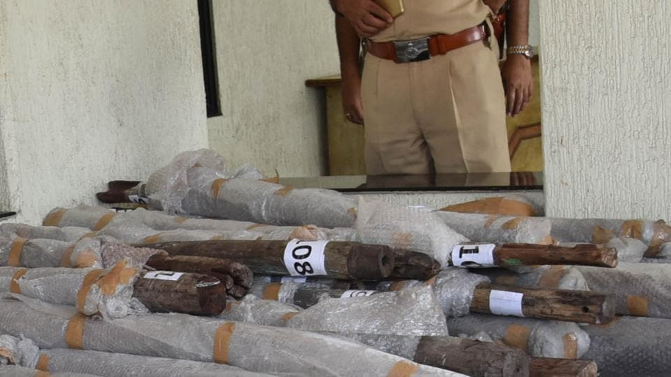 Sandalwood logs weighing 59 kg, estimated to be worth Rs 3.6 lakh, were found in a red car.