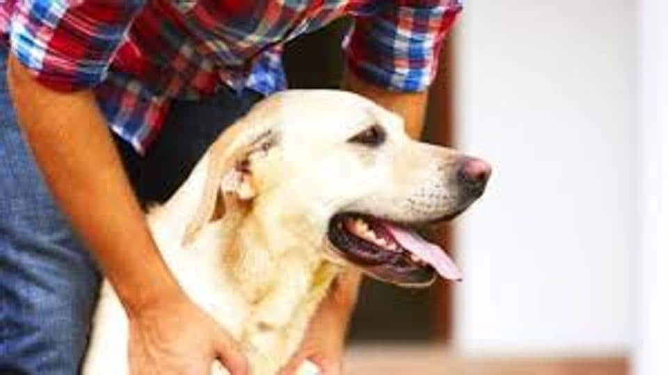 pets,Mumbai pets,veterinary services