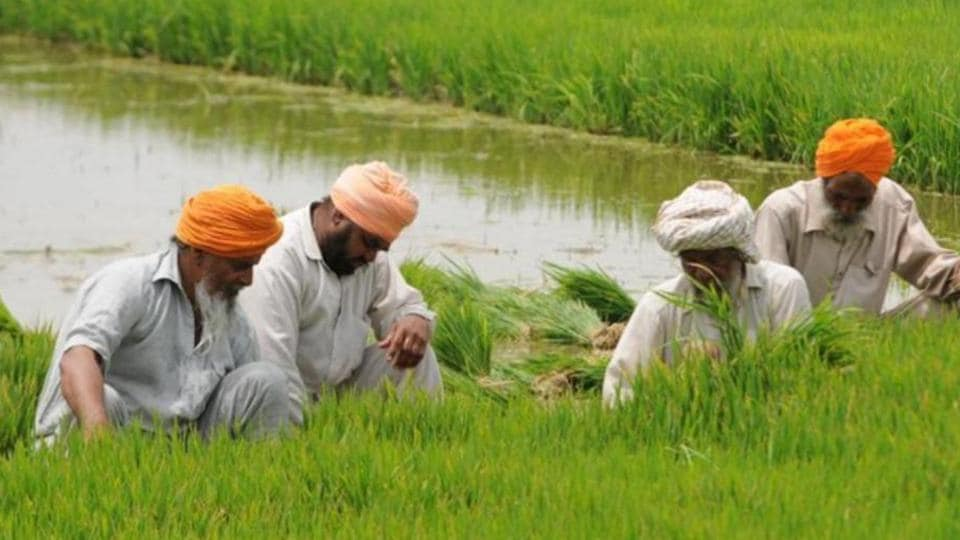 "Karamjeet Singh, from Sukhan Wala village in Faridkot, said, ""I sow paddy in 24 acre and need 1,600 litre during the paddy season. From Rs 90,000 I spent on diesel last year, my cost this year will be at least Rs 1.15 lakh."