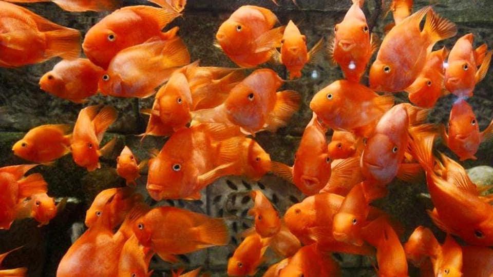 fish,Haryana,aquarium house