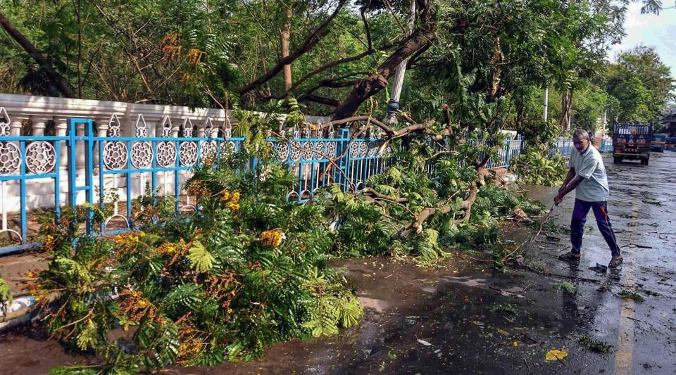 Uprooted trees after late night storm and rain in Kolkata.