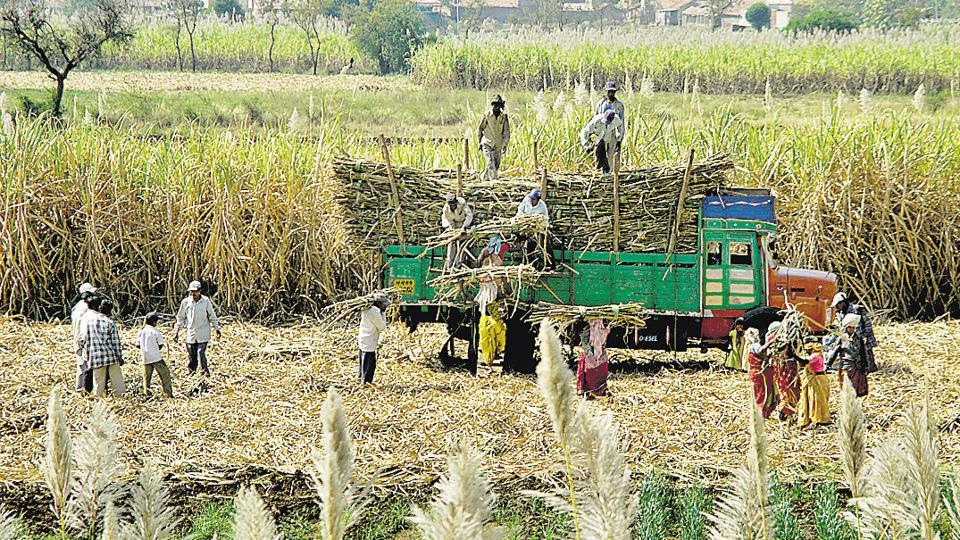 sugar sector,Chinese sugar sector,Narendra Modi