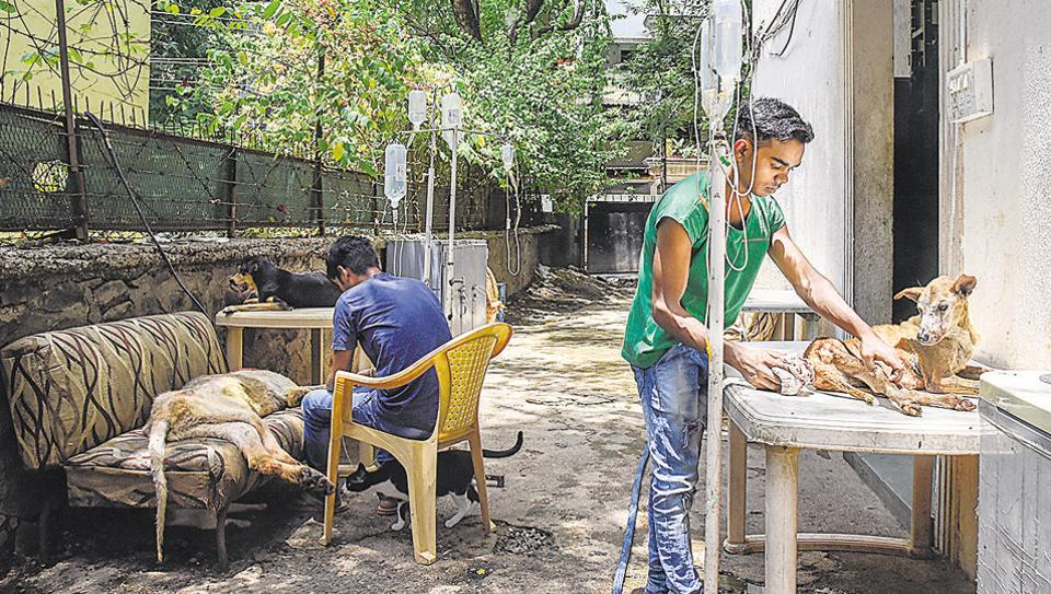 Mission Possible animal shelter in Gurunanak nagar treats and takes care of abandoned, injured, sick, abused or maggot-infected animals. Due to its proximity to housing societies, many residents complain of filthy surroundings and foul smell.