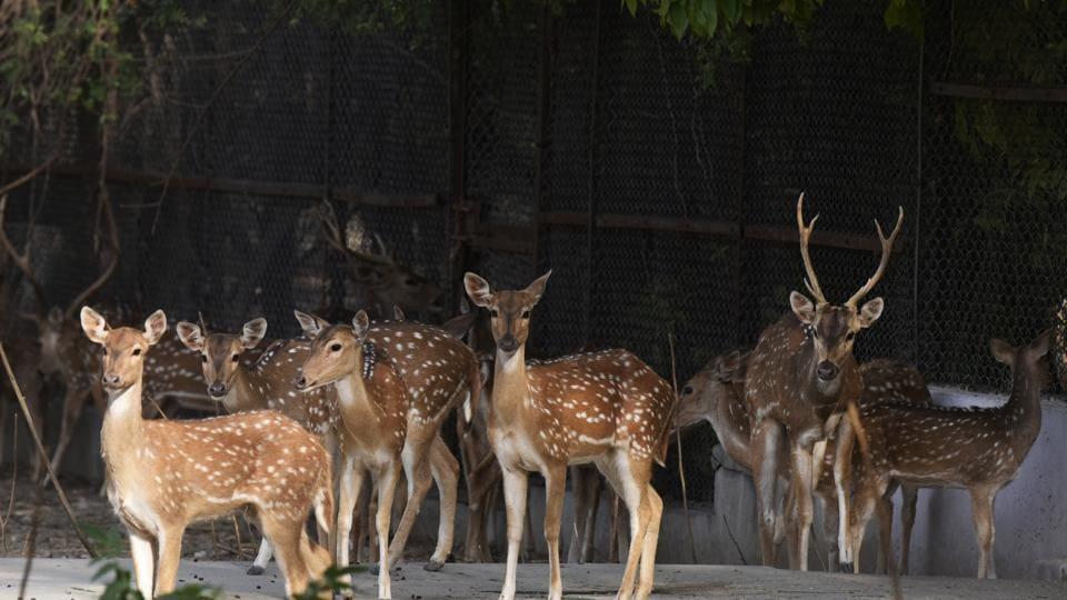 Delhi,Delhi Zoo,Central Zoo Authority