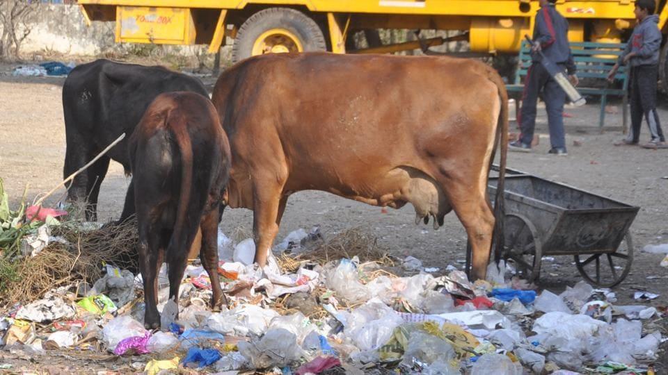 Dehradun produces 327.9 tonnes of plastic waste per day, according to the survey.