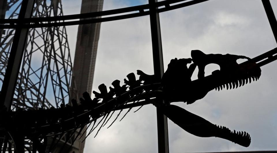 A dinosaur fossil is on display at the Eiffel tower, in Paris, France.