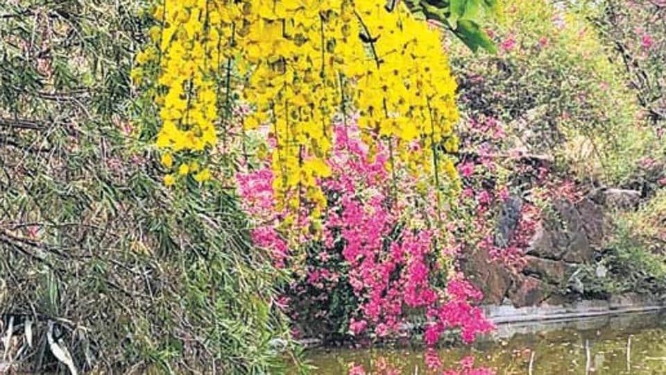 Delhiwale,Buddha Jayanti Park,Delhi gardens