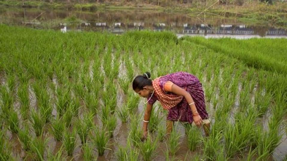 Bihar,Bihar farmers,Crop assistance