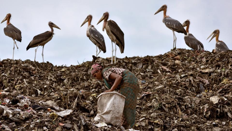A scavenger collects recyclables next to a flock of Greater Adjutant birds at a dump site in Guwahati, Assam, on June 4, 2018. (Anuwar Hazarika / REUTERS)