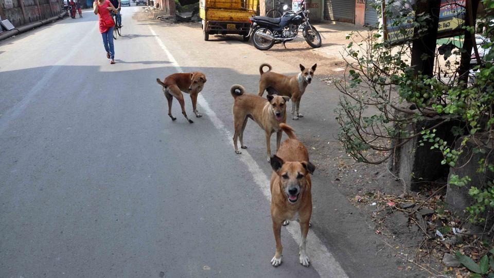 Supreme Court,Stray dogs menace,Uttar Pradesh Sitapur