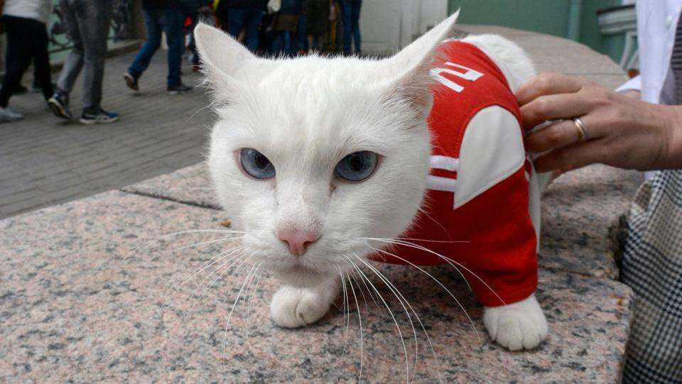 Achilles the cat,FIFA World Cup 2018,Paul the octopus