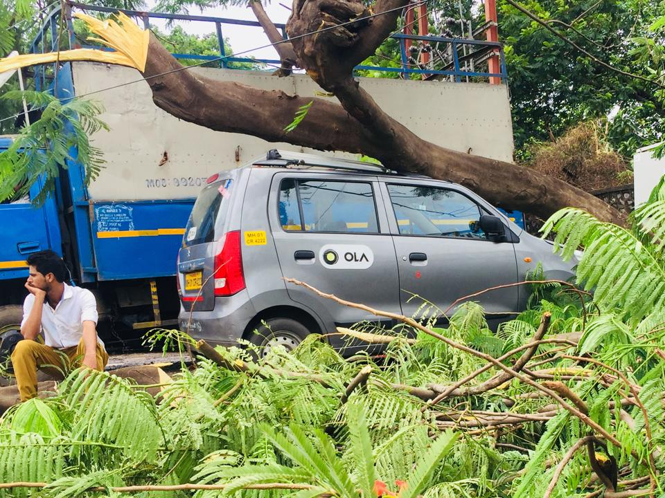 A huge tree fell on a parked car during heavy rain at Turbhe on Saturday