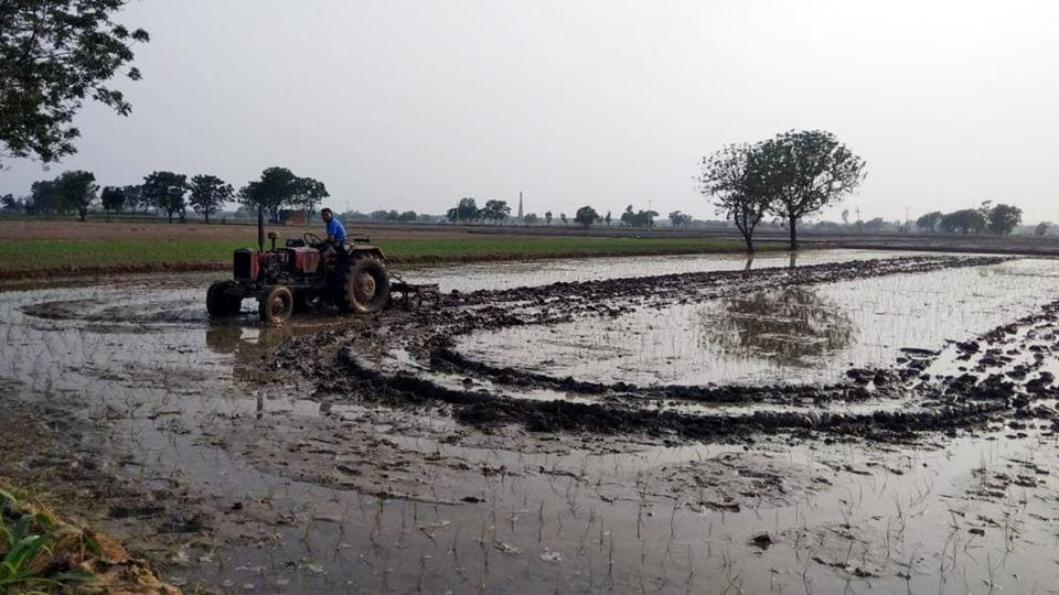 Farmers,paddy sowing,Punjab