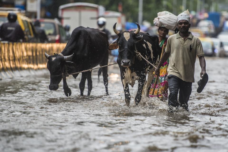 Leptospirosis,Mumbai monsoon,Monsoon diseases