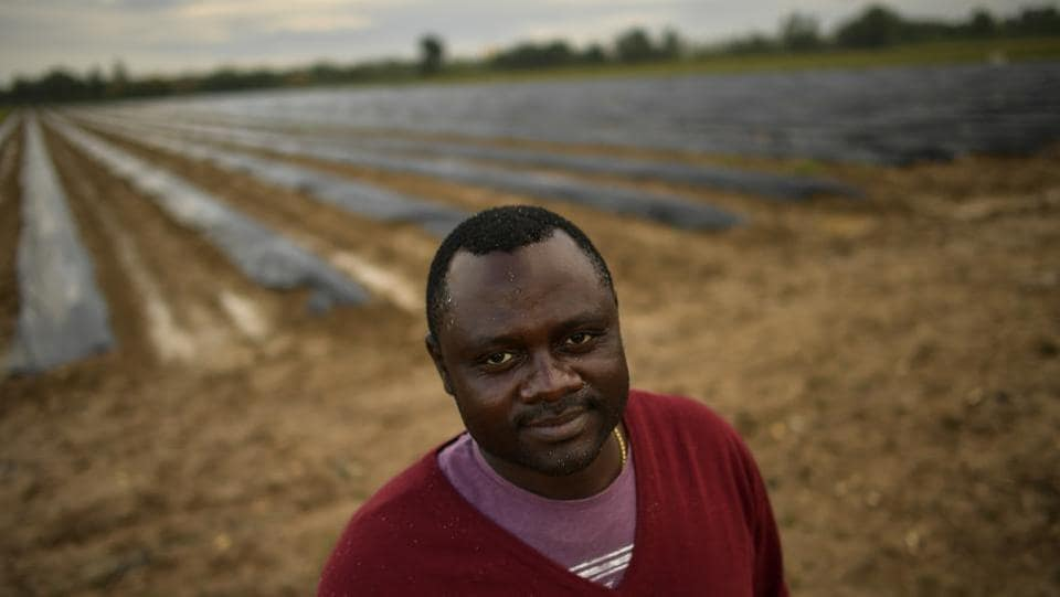 Despite the arduous and back-crushing job, 38-year-old Cameroon-native Blaise Tchouankwi Ngabo said he was willing to work as fast as possible in a farm near the town of Caparroso in order to be paid more, as salaries for seasonal workers grow in line with the amount of asparagus harvested. (Alvaro Barrientos / AP)