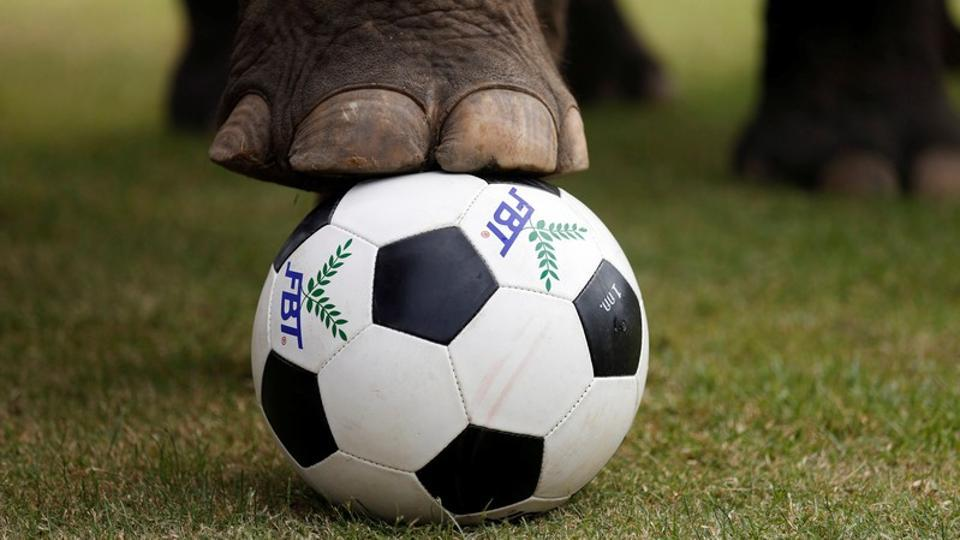 Elephants play football during an anti-gambling campaign for school children in Ayutthaya, Thailand.