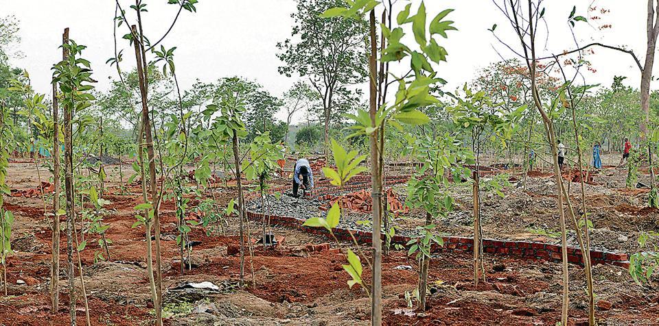 Navi Mumbai,Tree planting,Green initiative