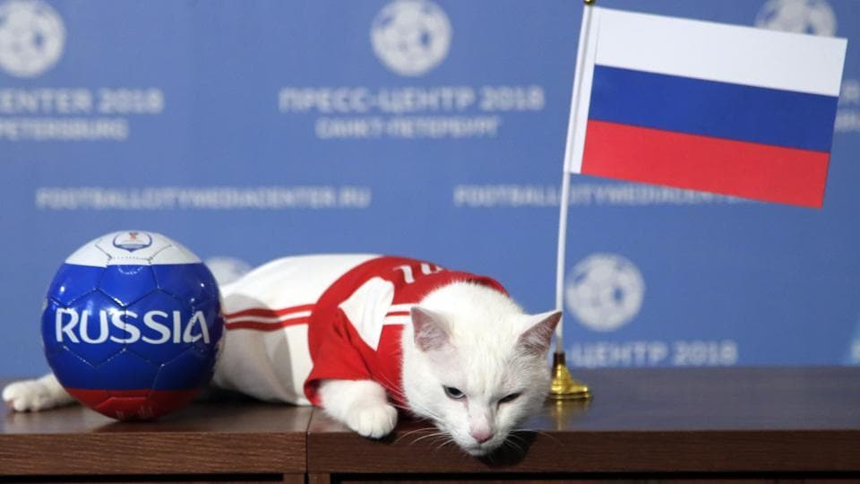 Russia's psychic cat Achilles picks home team for World Cup opener