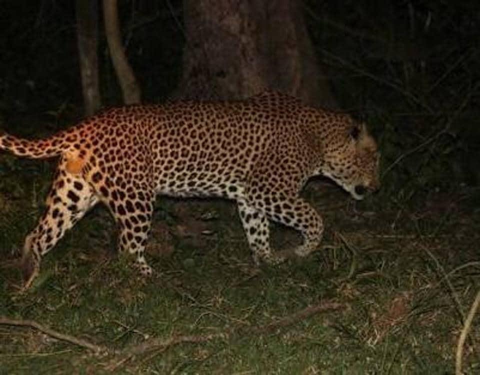 Mumbai,leopards,Aarey Colony