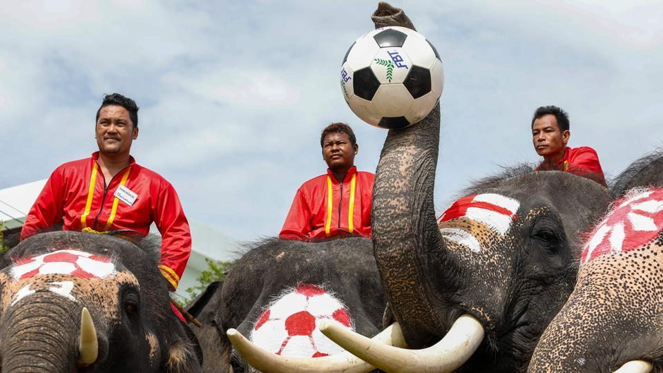 Elephants participate in a football game to kick off the World Cup fever as part of an anti-gambling campaign at the ancient Thai city of Ayutthaya. (Krit Phromsakla Na Sakolnakorn / Thai News Pix / AFP)