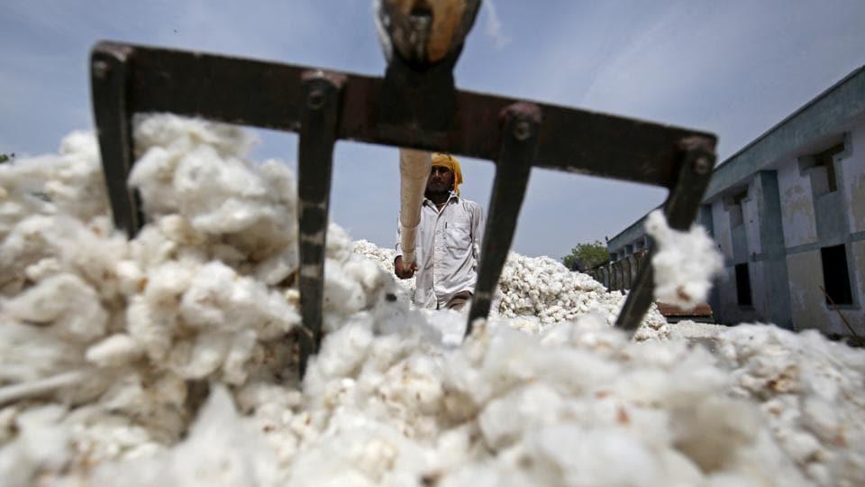 Tiruppur,knitwear,cotton rate