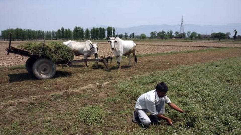 Factors favouring the cultivation of basmati — temperature, humidity, daylight and soil conditions — are abundant in states such as Punjab, Uttar Pradesh, Uttarakhand, Himachal Pradesh, Jammu &Kashmir, Delhi, Haryana and MP. India is the world's leading producer and exporter of Basmati rice with an annual production of 60 lakh tonnes.