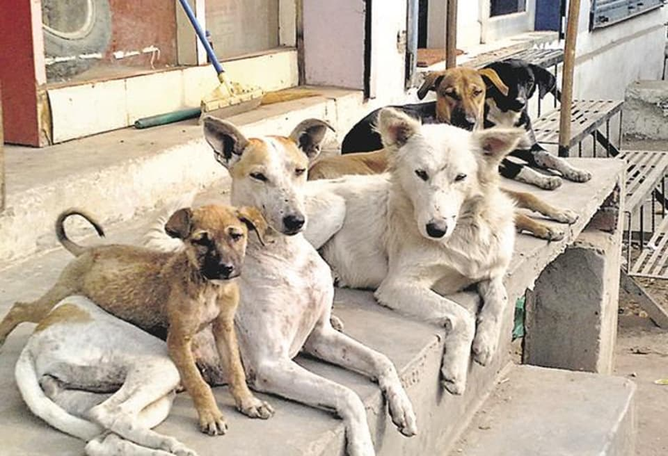 stray dogs,homes,abroad