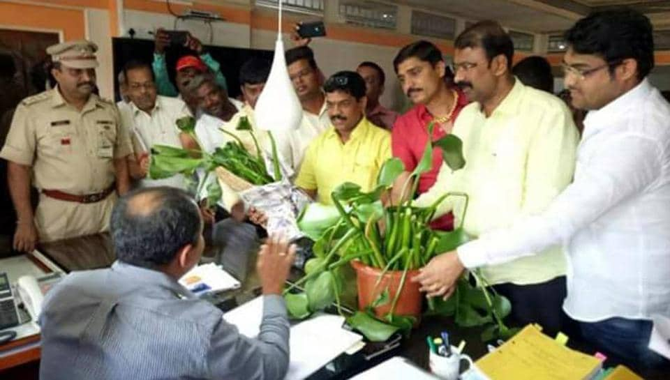 Pune,Pimpri-Chinchwad civic body,waiting for rains to clear hyacinth