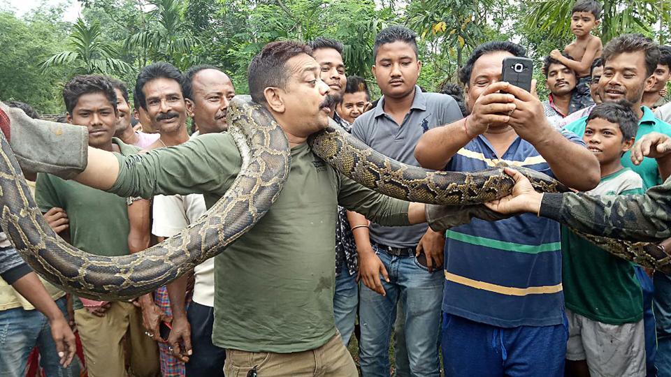 Python,Bengal Forest Officer,Forest Ranger
