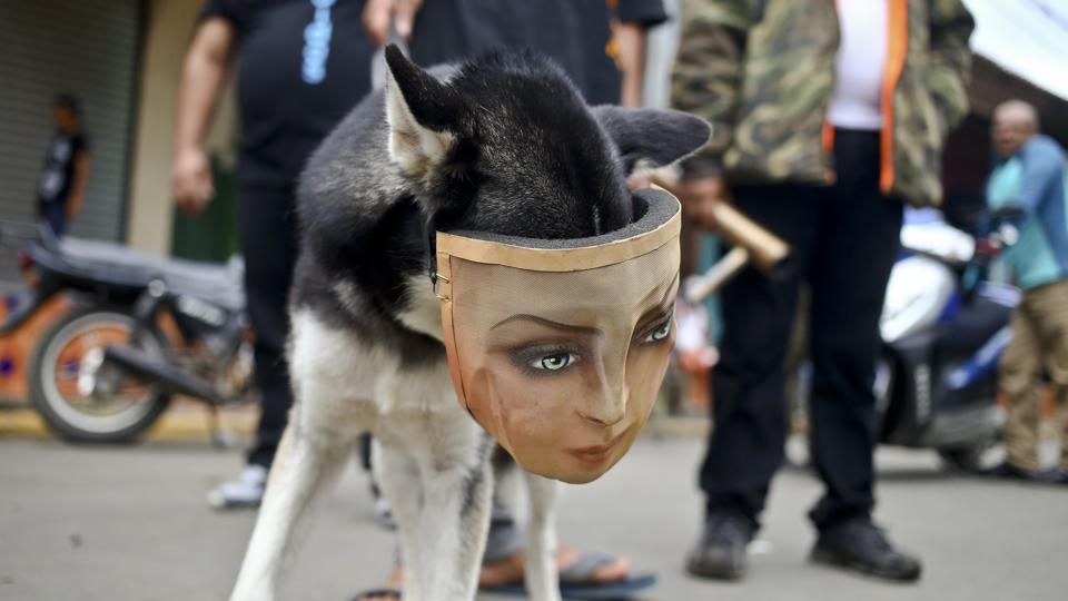 A protester's dog wears a mask as he accompanies his owner at a road block in Masaya, Nicaragua. Students now form the backbone of a protest movement against President Daniel Ortega that has left his administration shaken. The use of cobblestones was also symbolic during the revolution because they were made at a Somoza family factory. (Esteban Felix / AP)