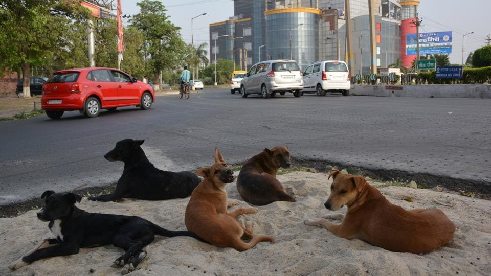 In March this year, a six-year-old boy too died after an attack by stray dogs.
