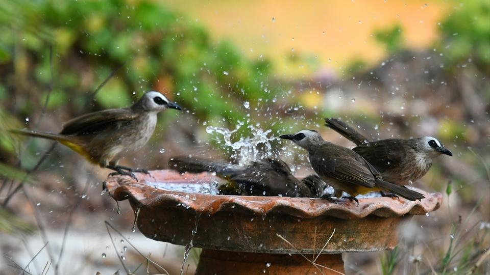 Water bowl for animals,Watering holes for birds,Gurugram