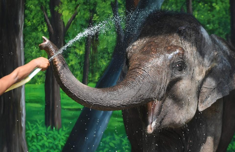 Elephants,Elephants trapped,Man-animal conflict