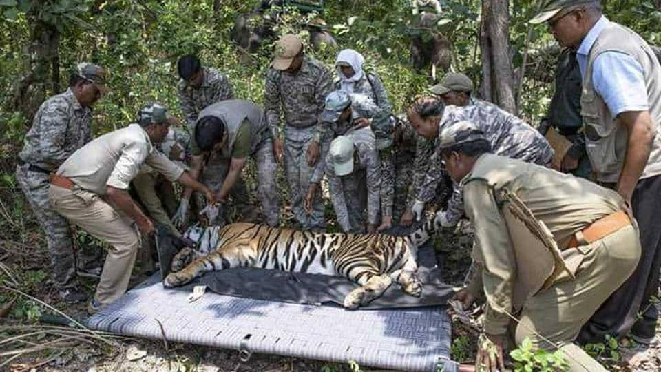 Odisha,Tigers,Tiger reserve