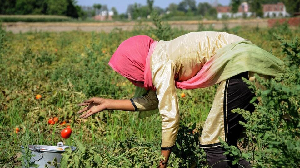 Farm income,Narendra Modi,minimum support price