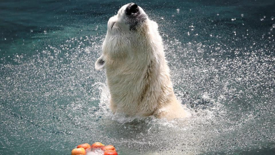 A polar bear plays with an ice block filled with apples on a hot day at an amusement park in Yongin, South Korea. (Kim Hong-Ji / REUTERS)