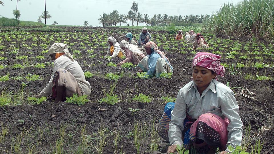 farming,farmers,e-nam