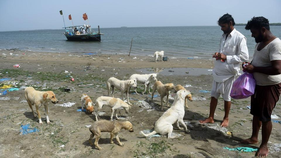 """We see them standing at the shore of the island in hope of food from us. So we feel their silent call,"" says Abdul Aziz (R), a 30-year-old fisherman, after feeding the dogs on Dingy Island some pancakes and water left over from their own supplies. (Rizwan Tabassum / AFP)"