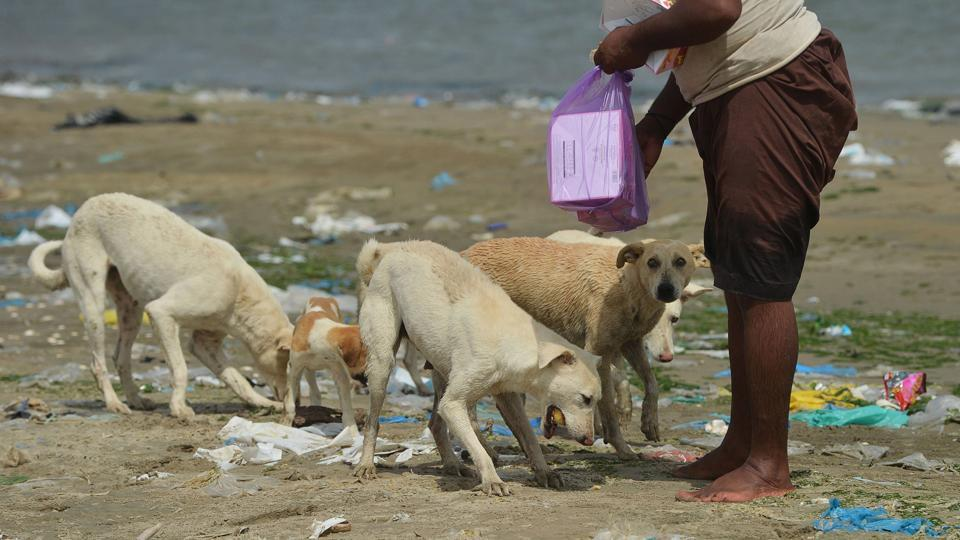 "Puppies are overrun by the larger dogs. But the kind fishermen make sure even the smallest get a share. ""A human being is nothing without humanity,"" Aziz says, looking at the island, where plastic bags and a syringe lie among the hungry creatures. ""When we feel the pinch of hunger and thirst, they also must be feeling it."" (Rizwan Tabassum / AFP)"