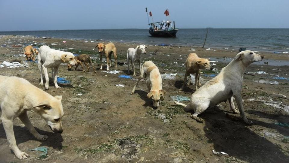 "More than a dozen decrepit dogs splash into the Arabian Sea as a small wooden boat approaches. They know the fishermen's mission: bringing food and water for the canine population of one of Karachi's ""dog islands"". (Rizwan Tabassum / AFP)"
