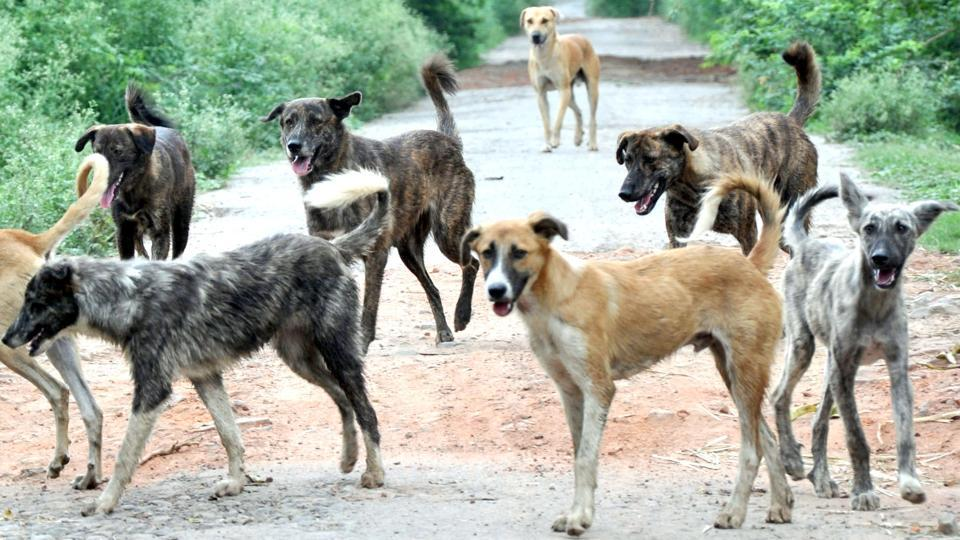 Toddler mauled to death,Chandigarh,stray dogs