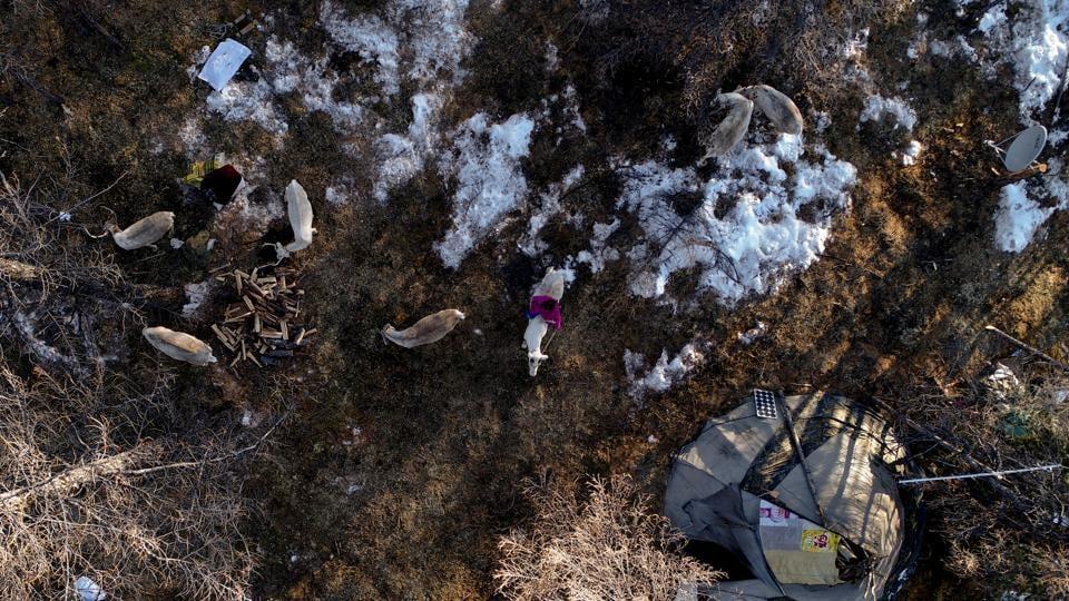 Mongolia,Rat plague,Xinhua news agency