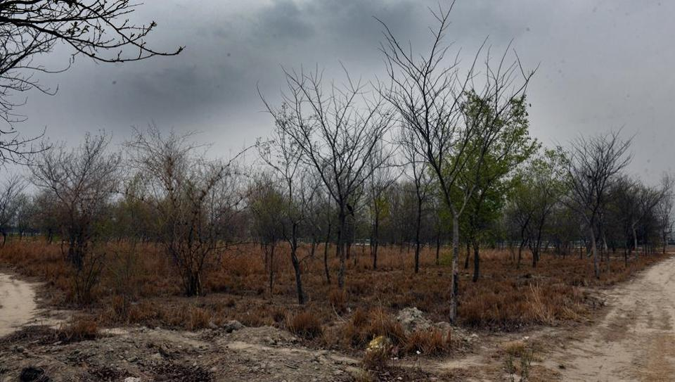 A view of forest area at Garhi Mandu village, near Usmanpur, Shahdara, New Delhi, India.