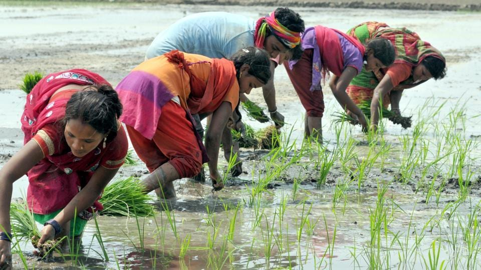 Agricultural Day of Maharashtra,Weak monsoon,sowing